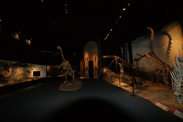 Os exemplares do Museu de Trelew!